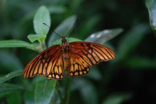 Free Brown And Black Butterfly On Green Plant During Daytime Stock Images - 82996874