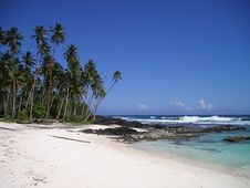 Free Green Palm Tree Near Beach Under Clear Blue Sky Royalty Free Stock Photography - 82996887