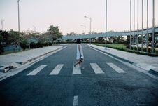 Free Woman Standing On Gray And White Road Crosswalk Stock Images - 82996924