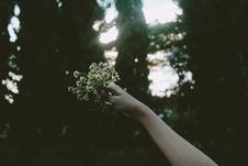 Free Person Holding Yellow Petal Flower During Daytime Stock Photo - 82996930