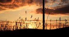 Free Silhouette Of Grass Under Gray And White Clouds During Sunset Royalty Free Stock Photography - 82997547