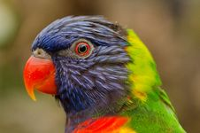 Free Profile Portrait Of Parrot Royalty Free Stock Image - 82997836