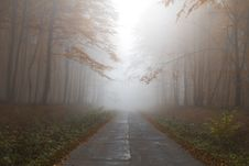 Free Foggy Road Through Forest Royalty Free Stock Image - 82998026