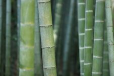 Free Close Up Of Bamboo Stalks Stock Image - 82998291