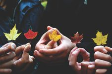 Free Autumn Leaves Royalty Free Stock Image - 82998656