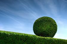 Free Topiary Royalty Free Stock Photography - 82998677