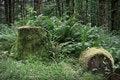 Free Fallen Mossy Tree Stump Royalty Free Stock Photography - 836297