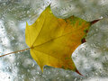 Free Autumn Leaf Stock Photography - 838662