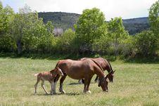 Free Horses Royalty Free Stock Photo - 830475