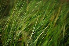 Free Grass Flow Stock Photos - 831503