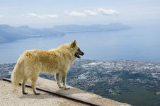 Free Dog Watching At Panorama Stock Image - 831731