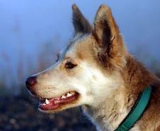 Free Dog Stock Photos - 832243