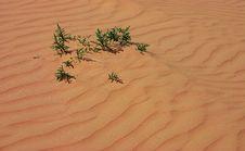 Free Sand Dune Stock Photo - 832280