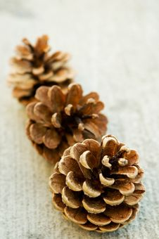 Free Pine Cones Stock Photo - 832660