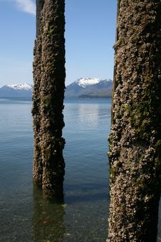 Barnacle Encrusted Pilings Royalty Free Stock Photo