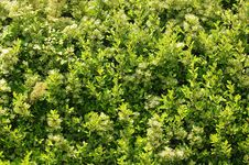 Free The Hedge !! Royalty Free Stock Photo - 837565