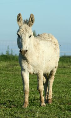 Free Donkey Royalty Free Stock Images - 838879