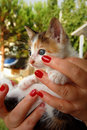 Free Kitten And Red Nail Polish Royalty Free Stock Photography - 8300627