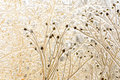 Free Ice Covered Flower Stems Royalty Free Stock Images - 8301269