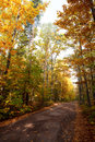 Free Autumn Leafs And Trees Stock Photography - 8301652