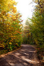 Free Autumn Leafs And Trees Royalty Free Stock Images - 8301679