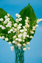 Free Lily Of The Valley Royalty Free Stock Image - 8305996