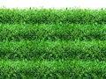 Free Spring, Green Grass Background Stock Photos - 8306973