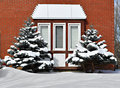 Free Bay Window And Two Evergreens Royalty Free Stock Photography - 8307557