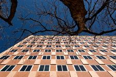 Free Building, Tree And Sky Royalty Free Stock Photos - 8300278