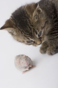 Free Small Cat And Mouse Stock Photo - 8301270