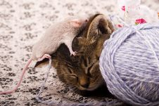 Free Small Cat And Mouse Royalty Free Stock Image - 8301276