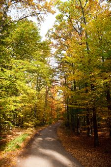 Free Autumn Leafs And Trees Royalty Free Stock Images - 8301419
