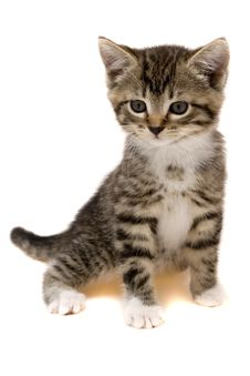 Free Small Cat Royalty Free Stock Photo - 8301545