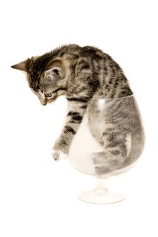 Free Small Cat Stock Image - 8301601