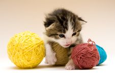 Free Small Cat Royalty Free Stock Image - 8301686