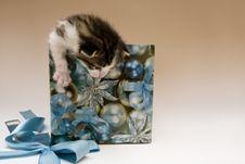 Free Small Cat Stock Photos - 8301733