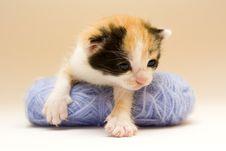 Free Small Cat Stock Photos - 8301803