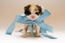 Free Small Cat Stock Photos - 8301923