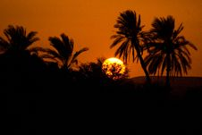 Free Sunset And Palms, Nile Royalty Free Stock Photo - 8302135