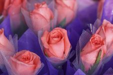 Free Rose Stock Images - 8302164