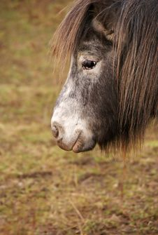 Free Pony 1 Stock Photos - 8302203