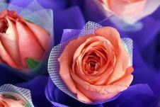 Free Rose Royalty Free Stock Photos - 8302328