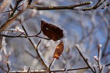 Free Frosty Leaves Royalty Free Stock Images - 8302439