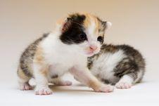 Free Small Cats Stock Photos - 8302443