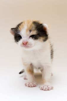 Free Small Cat Stock Photography - 8302512