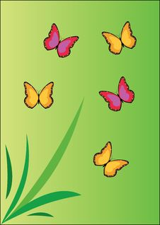 Free Butterfly Stock Photos - 8302843