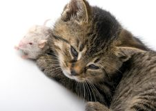 Free Cat And Mouse Royalty Free Stock Photos - 8302898