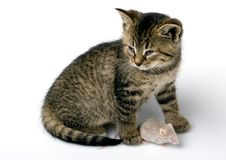 Free Cat And Mouse Stock Photo - 8303080