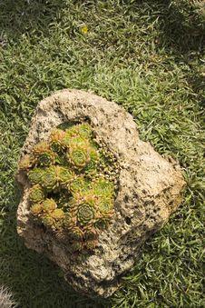 Free Tropical Succulent Garden Stock Photos - 8303083