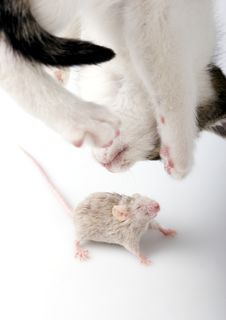 Free Cat And Mouse Stock Photos - 8303163